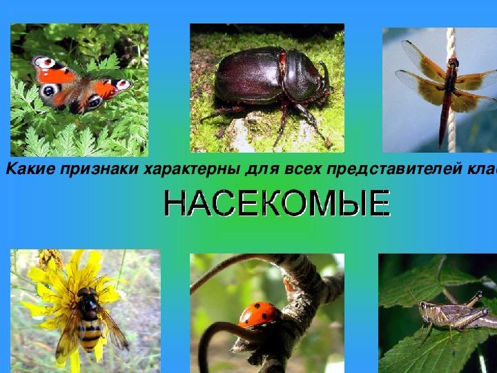 """Презентация по биологии """"Пчёлы и муравьи - общественные насекомые"""" (7 класс)"""
