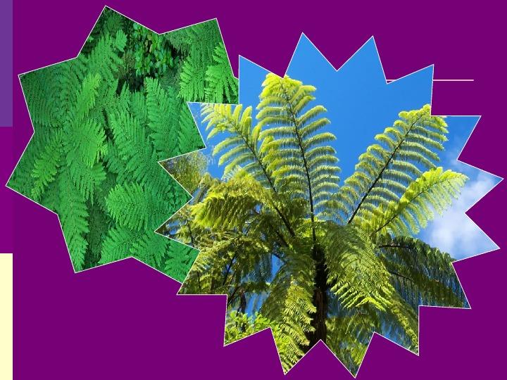"""Презентация к творческой работе учащегося по теме: """"Исследование влияния комнатных растений на содержание углекислого газа в воздухе учебных аудиторий"""""""
