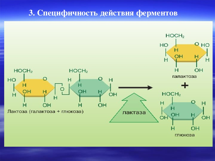 """Конспект урока химии по теме """"Ферменты"""" (10 класс)"""