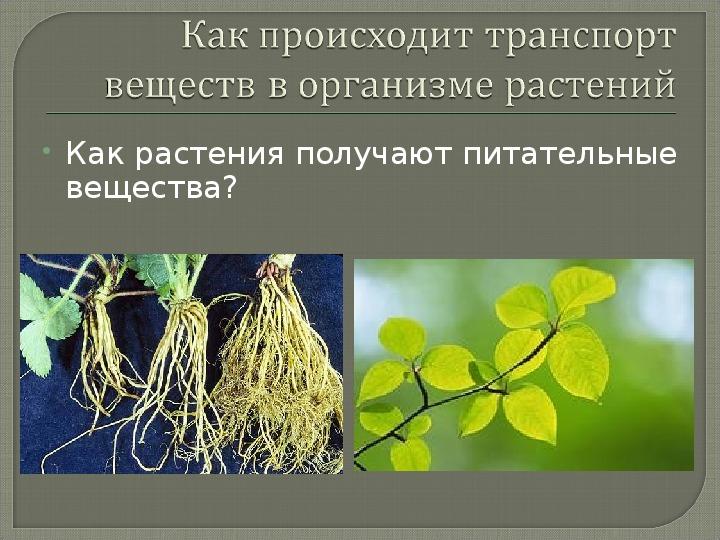 "Презентация по биологии на тему ""Транспорт веществ в организме"" (6 класс)"