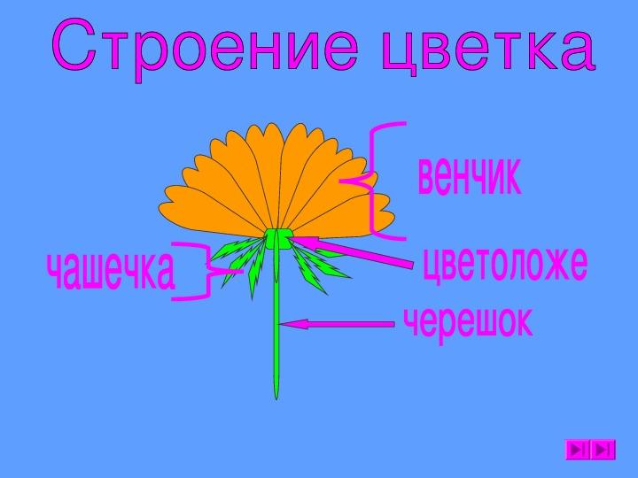 """Презентация """"Цветок"""" 6 класс"""