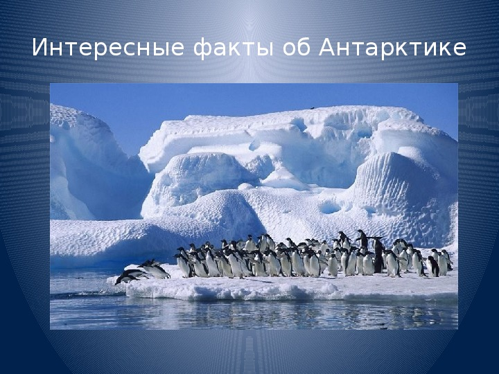 шестом информация об антарктиде с картинками жизни йон никакой