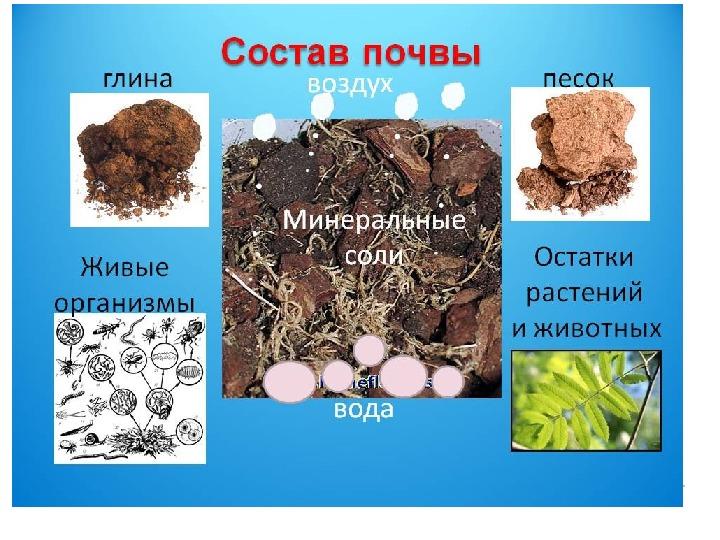 """Методическая разработка урока """"Почва - тело природы"""" (5 класс, природоведение)"""