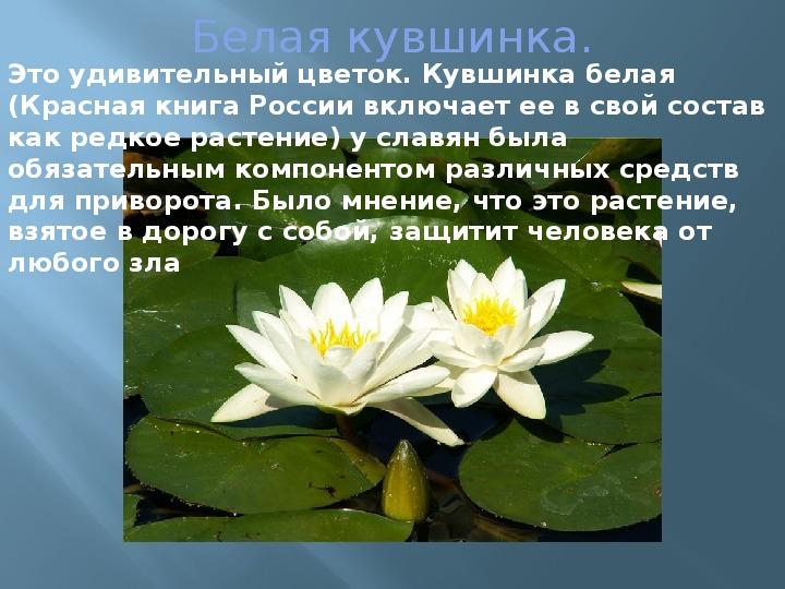 Страница красной книги россии с кувшинкой белой аналоги ответную