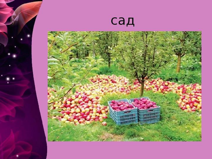 Конспект урока по окружающему миру  во   2а классе  по программе  «Начальная школа 21 века».Тема  урока: Сад и его обитатели. Растения сада.