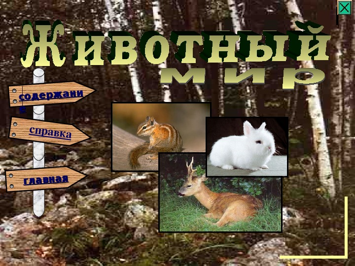 Презентация о природе Урала для  обучающихся начальных классов