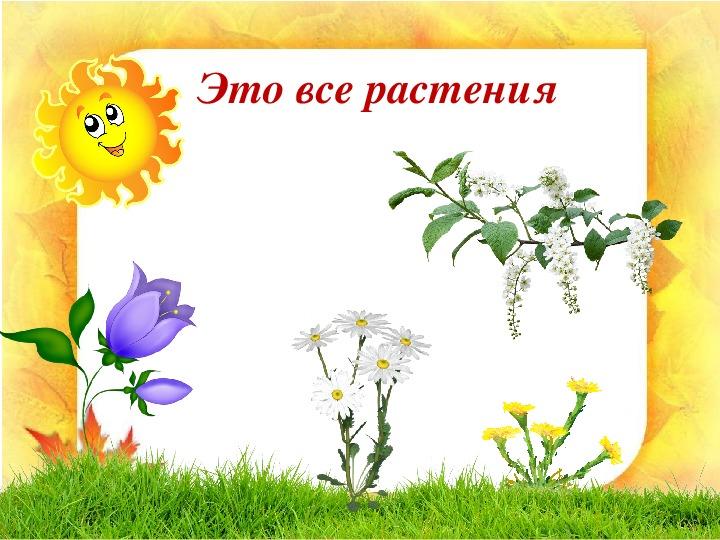 """Презентация """"Растения - часть живой природы"""" (1 класс, окружающий мир)"""