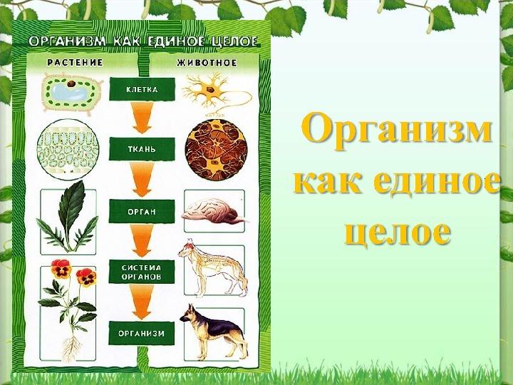 """План-конспект урока биологии """"Организм как единое целое"""""""