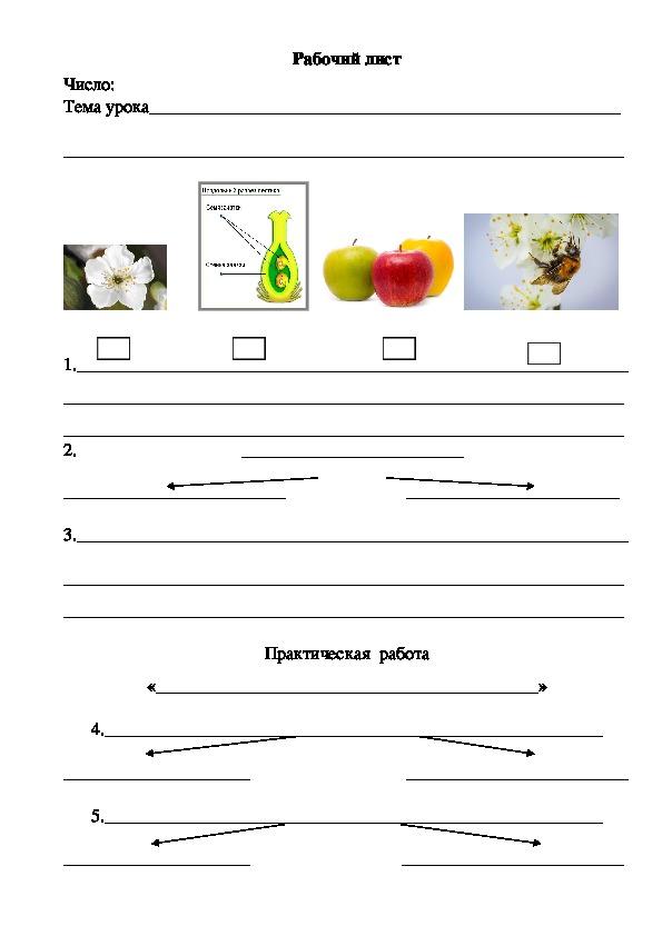 """Рабочий лист по биологии  к уроку  """"Плод. Разнообразие и значение плодов"""""""