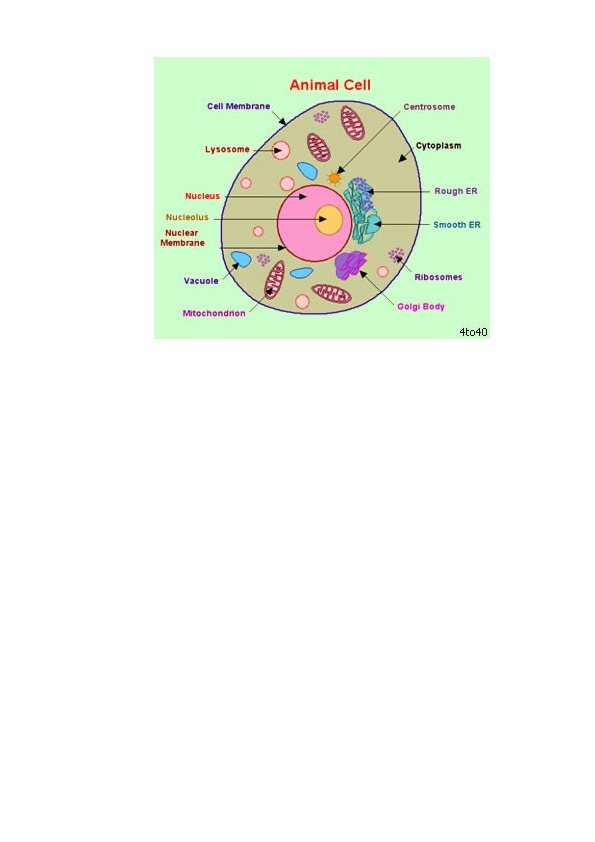 The cell - basic unit of organisms