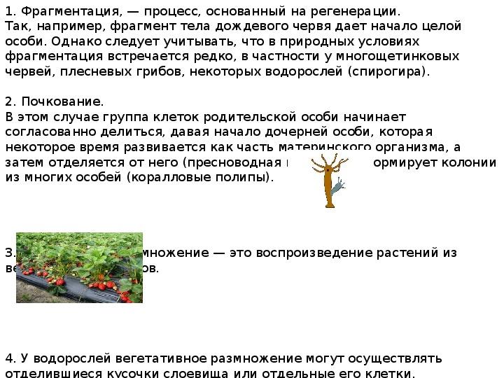 "Презентация по биологии на тему ""Типы размножения"" (10 класс)"