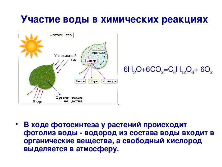 Фотосинтез и клеточное дыхание описание процессов