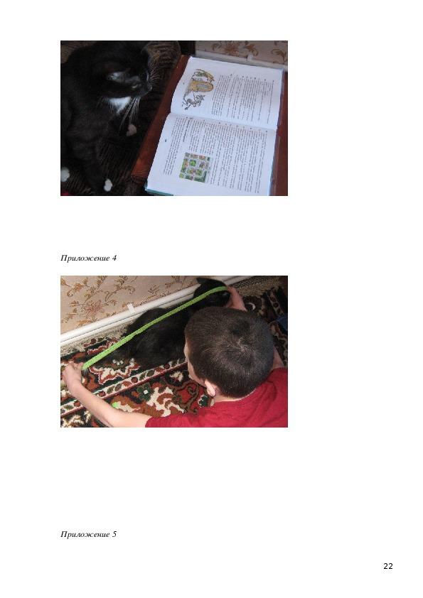 """Исследовательская работа """" Коты в математике"""""""