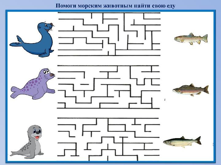 """Раздаточный материал """"Морские животные Камчатского края"""""""