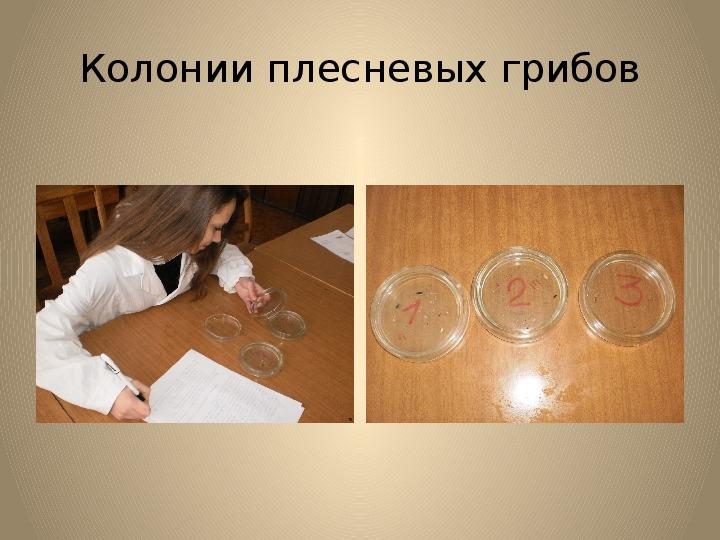 """Презентация по биологии на тему """"Пыль и её виды"""" 10 класс"""
