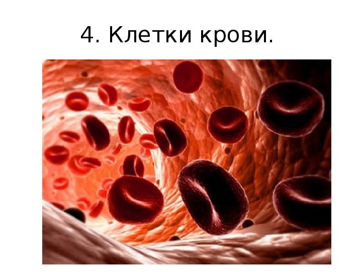 Проверочная работа по кровь 8 класс