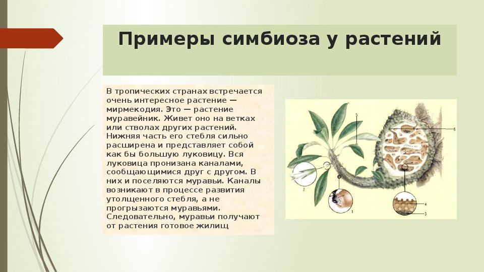 для картинки растений и пчел пример симбиоза так разность потенциалов