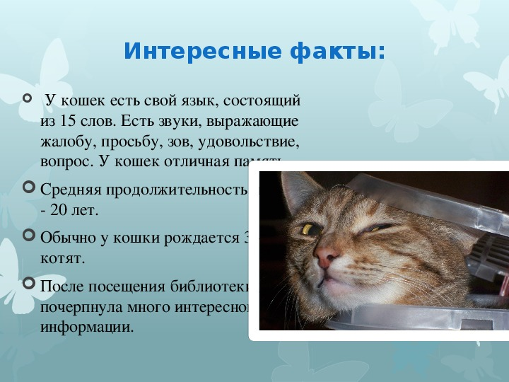"""Исследовательская работа """"Почему люди любят кошек?"""""""