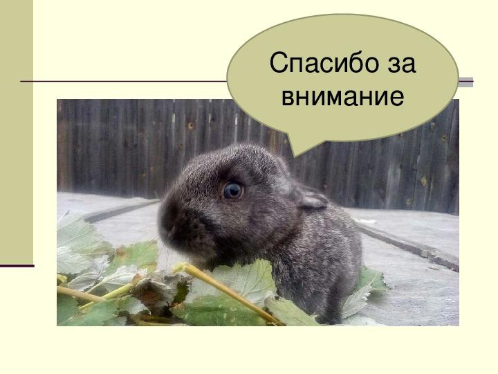 Влияние месяца окрола на рост кроликов