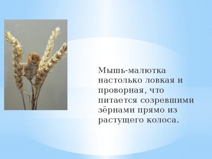 """Презентация """"Мышь"""""""